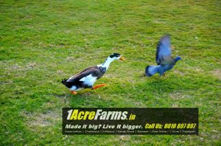 1 acre farm houses in delhi