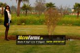 1 acre farms delhi